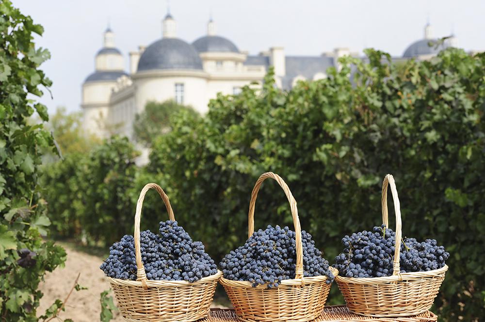 CCMXV_Chateau_Harvest_2 копия